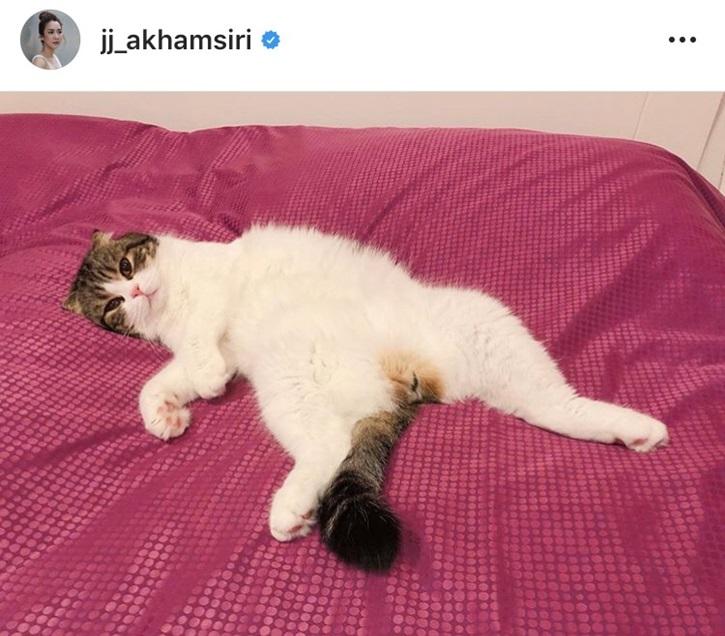 จั๊กจั่น แมว