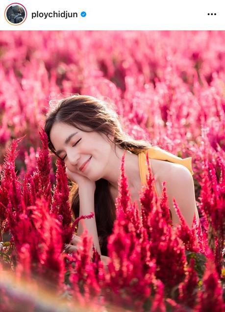 ดารา ทุ่งดอกไม้