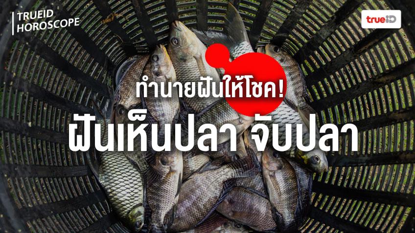 ทำนายฝัน ฝันว่าจับปลา ฝันเห็นปลา หมายถึงอะไร พร้อมเลขมงคลโชคลาภ โดย TrueID Horoscope