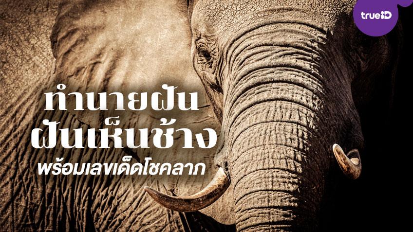 ทำนายฝัน ฝันเห็นช้าง หมายถึงอะไร พร้อมเลขมงคลนำโชคลาภ