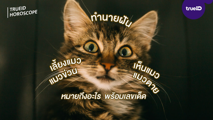 ทำนายฝัน ฝันเห็นแมว