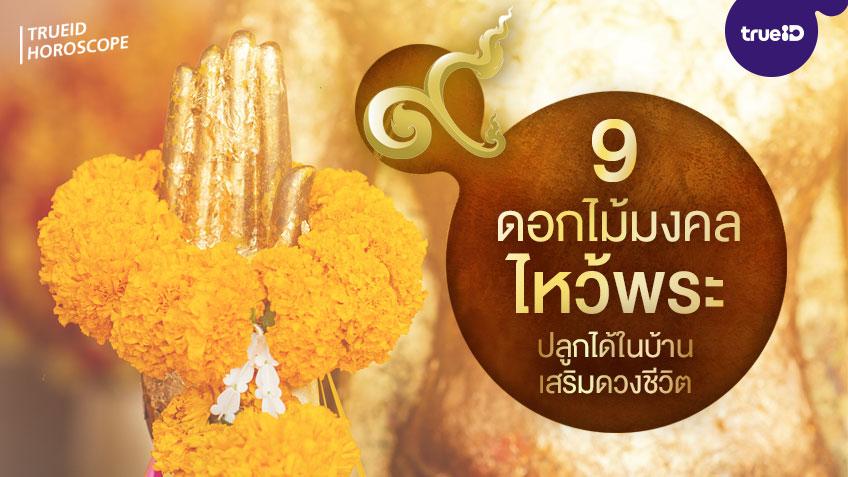 9 ดอกไม้มงคล ดอกไม้ไหว้พระสวยๆ ปลูกได้ในบ้าน มีดอกอะไรบ้าง หมายถึงอะไร เสริมดวงด้านไหน โดย TrueID Horoscope