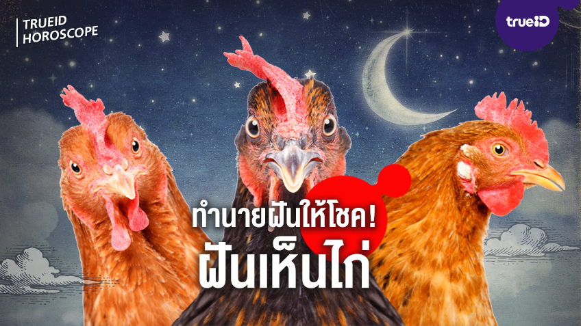 ทำนายฝัน ฝันเห็นไก่ ไก่ตัวผู้ ไก่หลายตัว หมายถึงอะไร พร้อมเลขมงคลโชคลาภ เคล็ดลับเสริมดวง