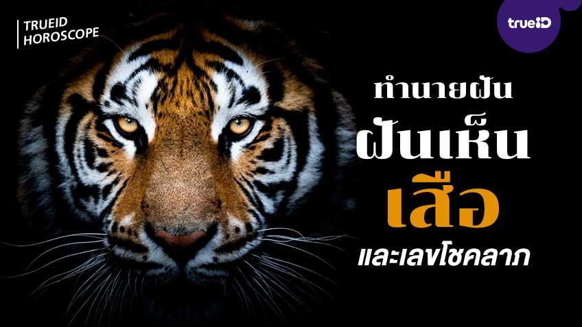 ทำนายฝัน ฝันเห็นเสือ ฝันว่าโดนเสือกัด ฝันว่าขี่เสือ หมายถึงอะไร พร้อมเลขมงคลโชคลาภ โดย TrueID Horoscope