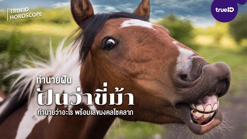 ทำนายฝัน ฝันว่าขี่ม้า หมายถึงอะไร พร้อมเลขมงคล โชคลาภ