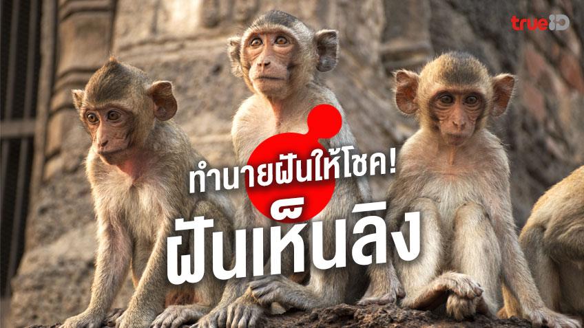ฝันเห็นลิง ลิงหลายตัว ลิงตัวใหญ่ หมายถึงอะไร พร้อมเลขโชคลาภ