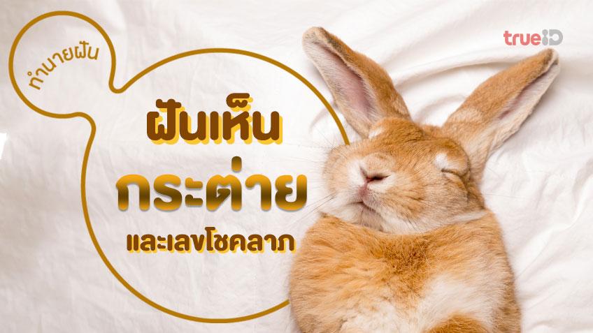 ฝันเห็นกระต่าย ฝันว่าจับกระต่าย หมายถึงอะไร ทำนายฝันว่าอะไร พร้อมเลขโชคลาภ