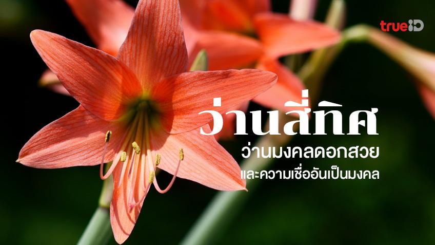ว่านสี่ทิศ ว่านมงคลดอกสวย วิธีการปลูกและความเชื่ออันเป็นมงคล