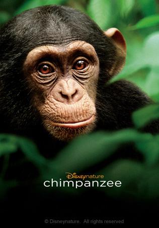 ชิมแปนซี ผจญภัยในป่ากว้าง