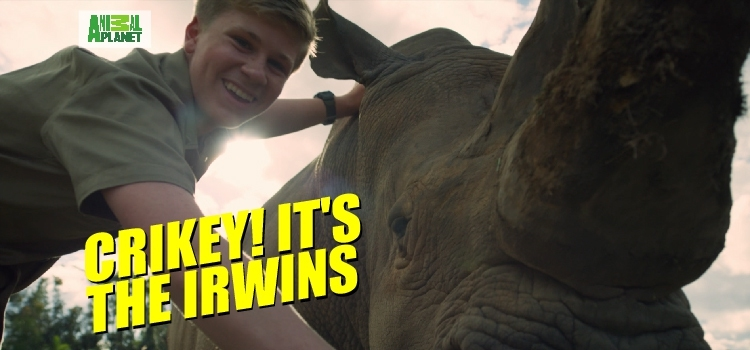 Crikey! It's the Irwins Crikey! It's the Irwins : ตอนที่ 12