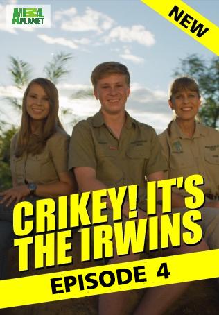 Crikey! It's the Irwins : ตอนที่ 4
