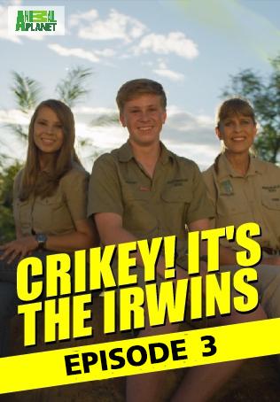 Crikey! It's the Irwins : ตอนที่ 3