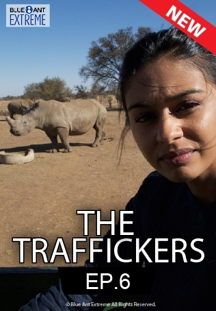 The Traffickers : BABIES & ADOPTION