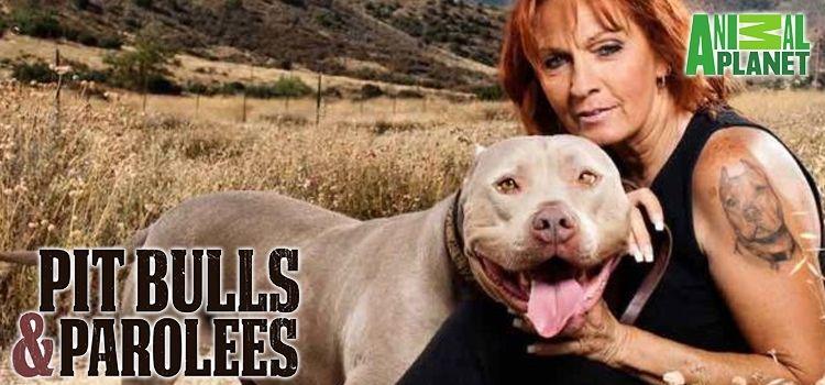 PIT BULLS & PAROLEES (SEASON 9) PIT BULLS & PAROLEES (SEASON 9) : FIRE DOG