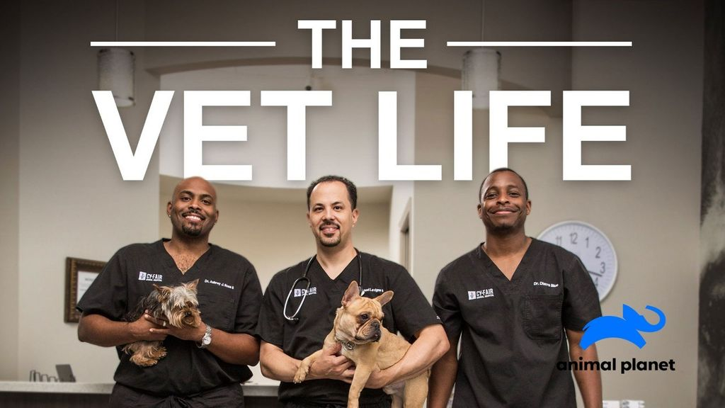 THE VET LIFE (S3) THE VET LIFE (S3) : A TALE OF TWO TAILS