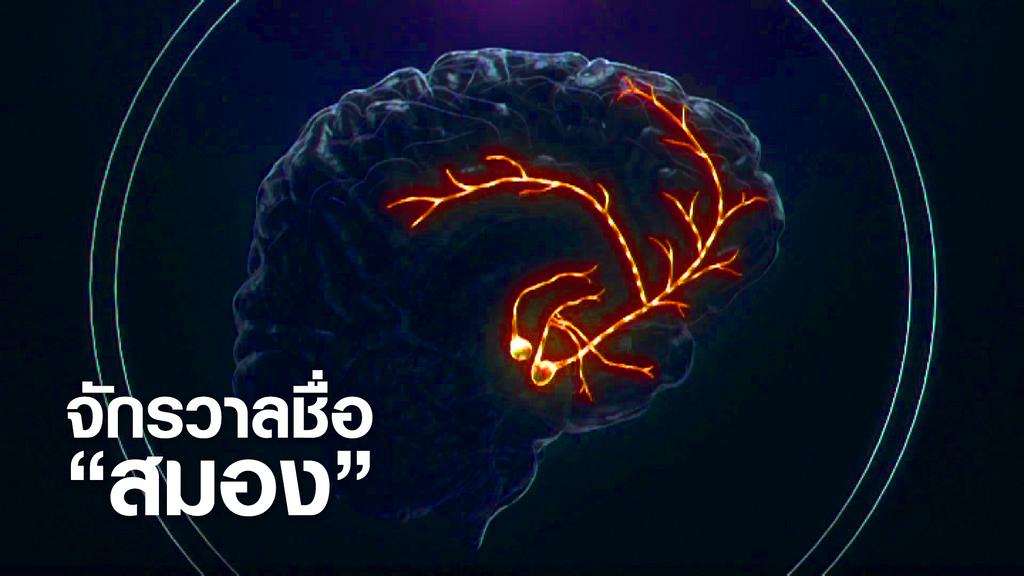 """จักรวาลชื่อ """"สมอง"""""""