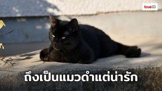 ถึงจะเป็นแมวดำ แต่ก็กำหัวใจทุกคนได้นะเมี๊ยว! พบความน่ารักของน้องแมวจิบิ ใน Only The Cat Knows