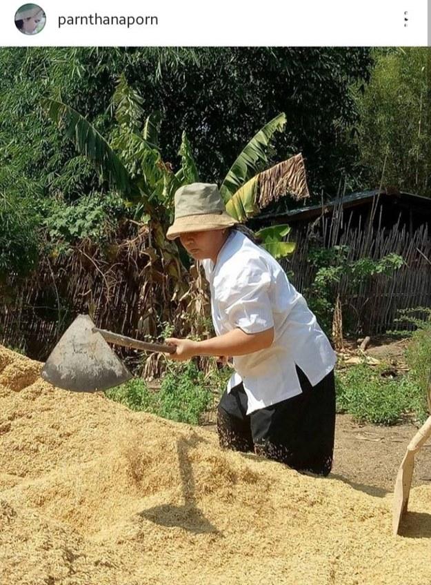 หน้าแดงแฝงพลังบุญ! ปาน ธนพร ชีวิตเรียบง่าย โกยแกลบไปปลูกผักกินในภูผาธรรม