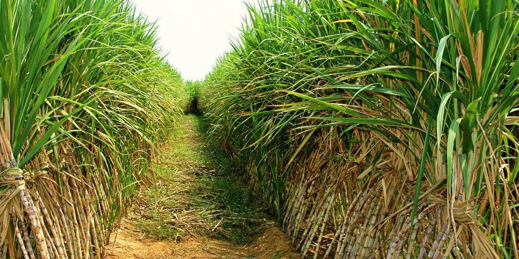 สอน. แจงปิดโรงงานน้ำตาลกุมภวาปี ไม่กระทบอุตอ้อยและน้ำตาลทราย