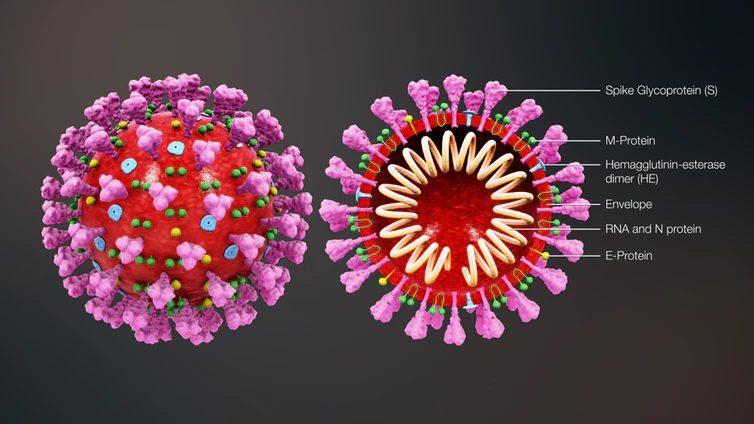 งานวิจัยชี้ไวรัส โควิด-19 อาจแพร่อยู่ในคนมานานแล้ว