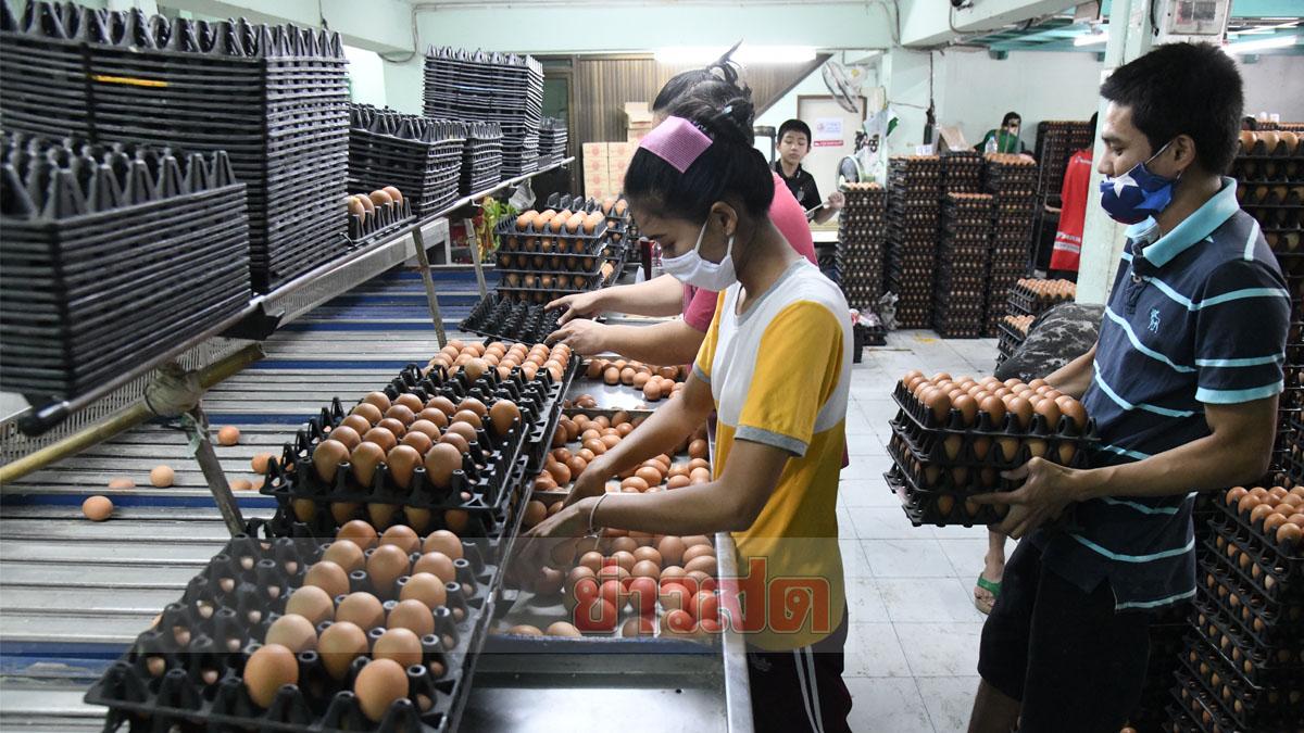 ผู้เลี้ยงไก่ไข่ จี้รัฐแก้ปัญหากักตุน ย้ำชัดไข่ไม่ขาดแคลน แฉพ่อค้าคนกลาง กว้านซื้ออื้อ