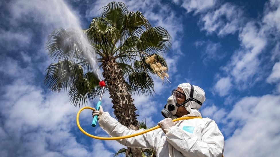 ไวรัสโคโรนา: สภาพอากาศร้อนชื้นฆ่าเชื้อไวรัส - หยุดยั้งการระบาดของโควิด-19 ได้จริงหรือ