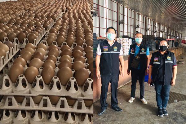 ปศุสัตว์ตรวจศูนย์รวบรวมไข่ทั่วประเทศพบปชช.ตื่น พ่อค้าคนกลางฉวยโอกาสปรับราคา
