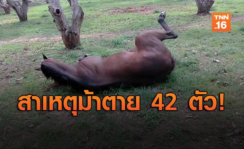 ปศุสัตว์ เผยเหตุม้า 42 ตัว ตายเฉียบพลัน เกิดจากกาฬโรคแอฟริกาในม้า