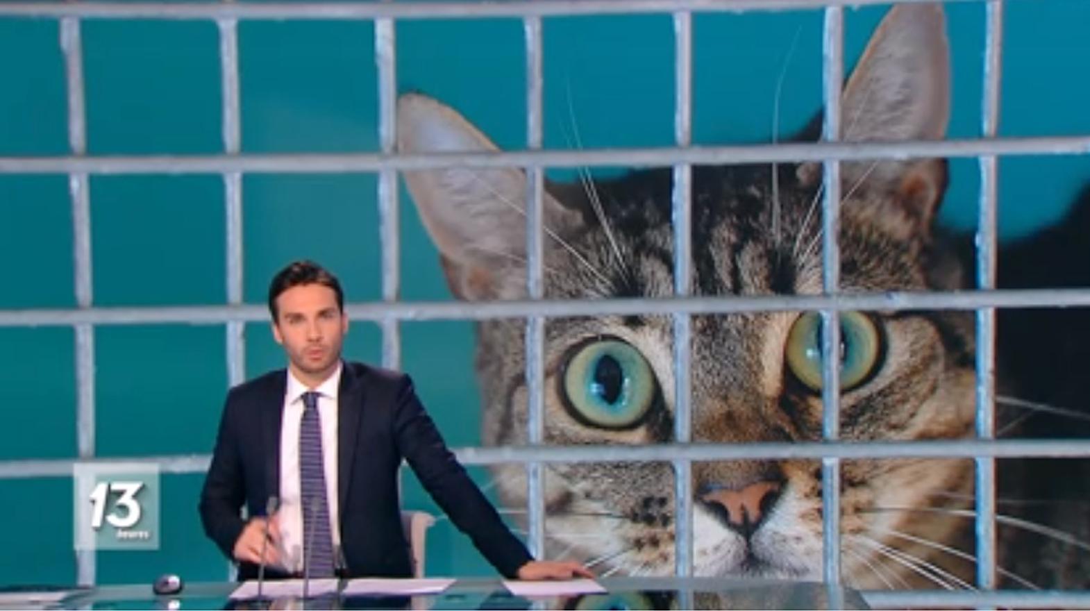 แมวติดโควิด เบลเยียมชี้เคสพิเศษ เจ้านายใกล้ชิดเกิน ยันสัตว์ไม่แพร่ต่อ