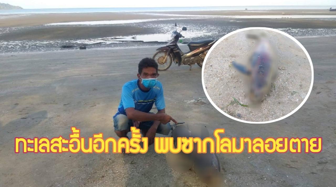 กระบี่-สลด พบซากโลมาหัวบาตร ตายเกยตื้น ชายหาดเหนือคลอง (ชมคลิป)
