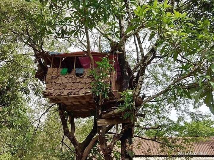 พม่าปลูกบ้านบนต้นไม้กักตัวเอง 14 วัน รอผลโควิด-19