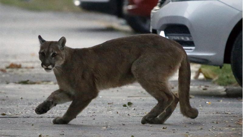 สัตว์ป่าบุกทวงคืนถิ่นที่อยู่ คนเก็บตัวหนีหวัดมรณะโควิด