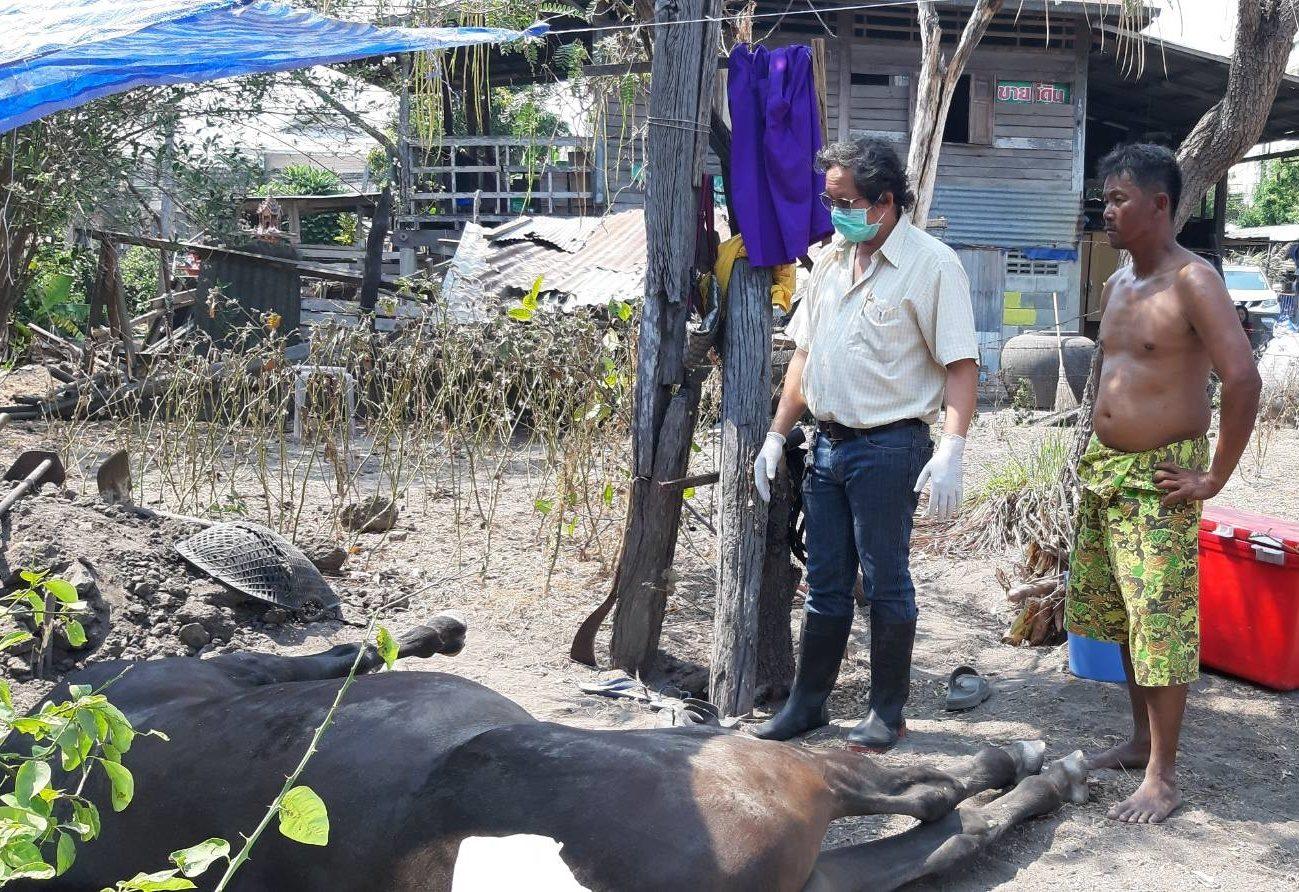 ปศุสัตว์ประจวบฯคุมเข้ม 70 ม้าท่องเที่ยวหาดหัวหิน หลังพบป่วยตาย 6 ตัว