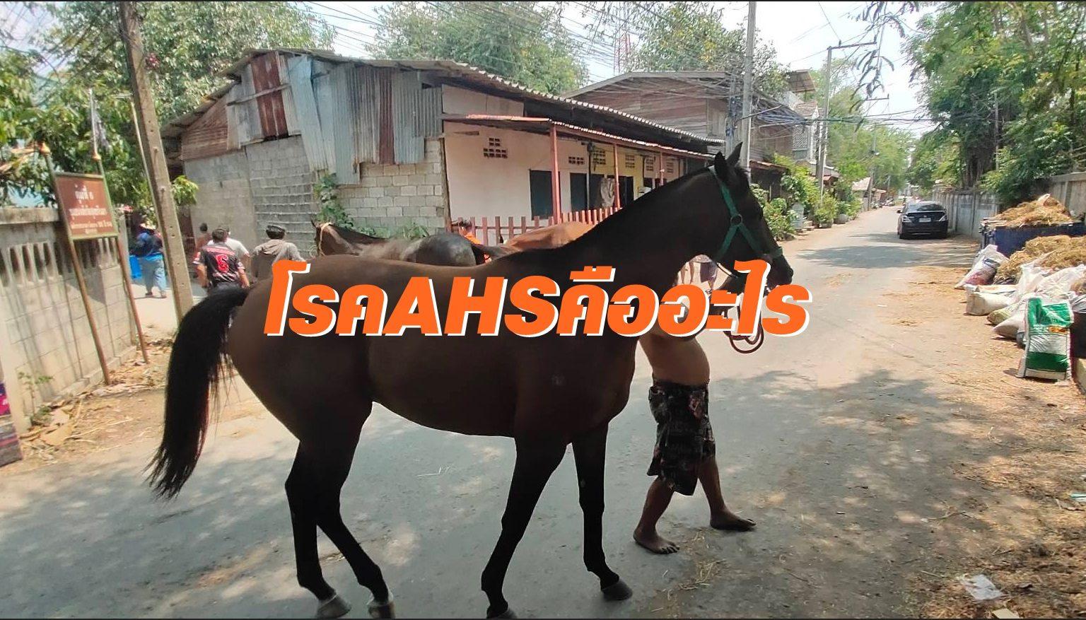 """มารู้จักโรคอุบัติใหม่ """"กาฬโรคในม้า"""" หรือ โรคกาฬโรคแอฟริกาในม้า"""