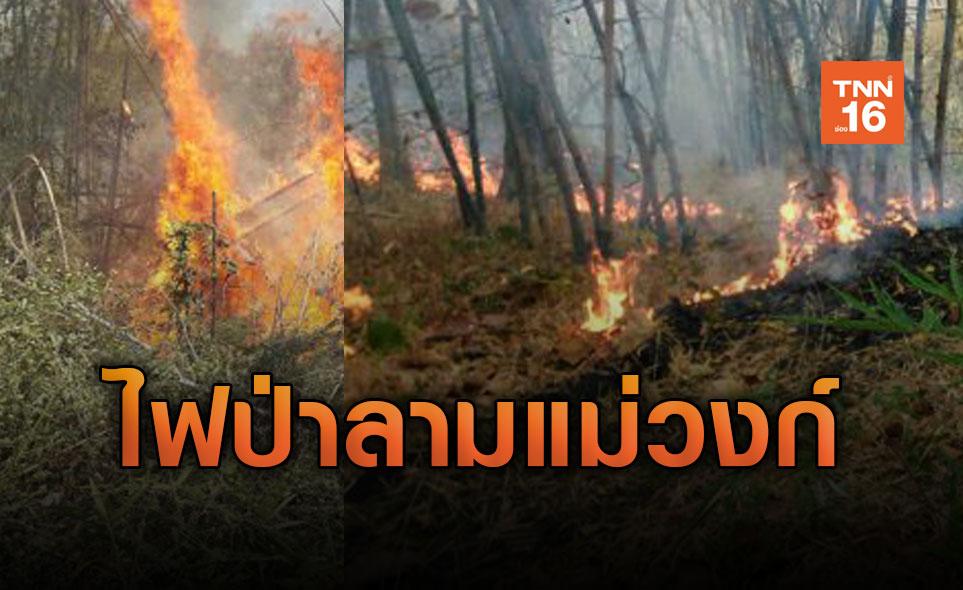 น้ำมือมนุษย์! ไฟลุกไหม้ป่าแม่วงก์