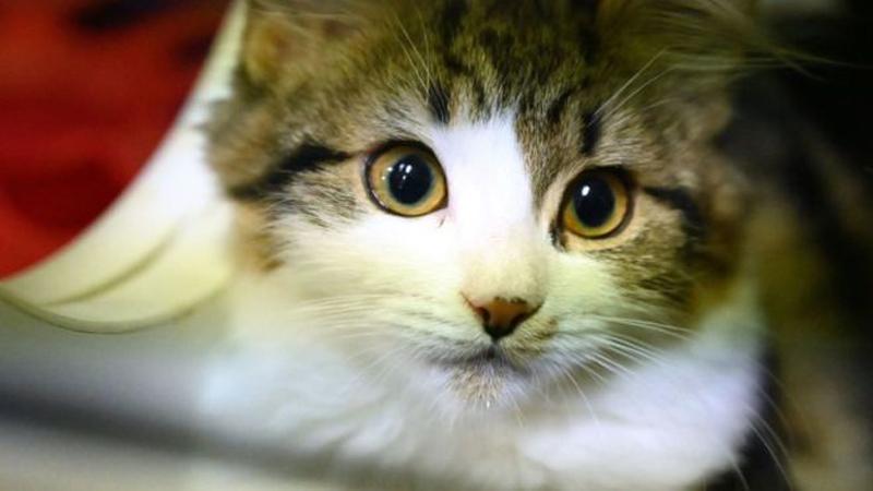 อดกินแมวแล้ว! เสิ่นเจิ้นนำร่องเมืองแรกของจีนห้ามกินทุกกรณี
