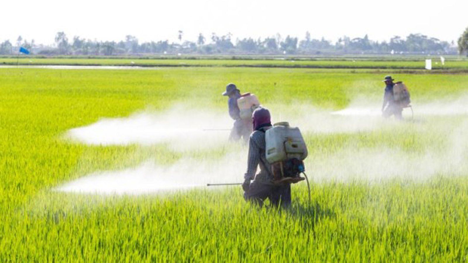 """""""มนัญญา"""" ดีเดย์แบนสารเคมี ย้ำเกษตรต้องส่งคืนร้านที่ซื้อมาใน 90 วัน ฝ่าฝืนจำคุกไม่เกิน 10 ปี ปรับไม่เกินล้านบาท"""