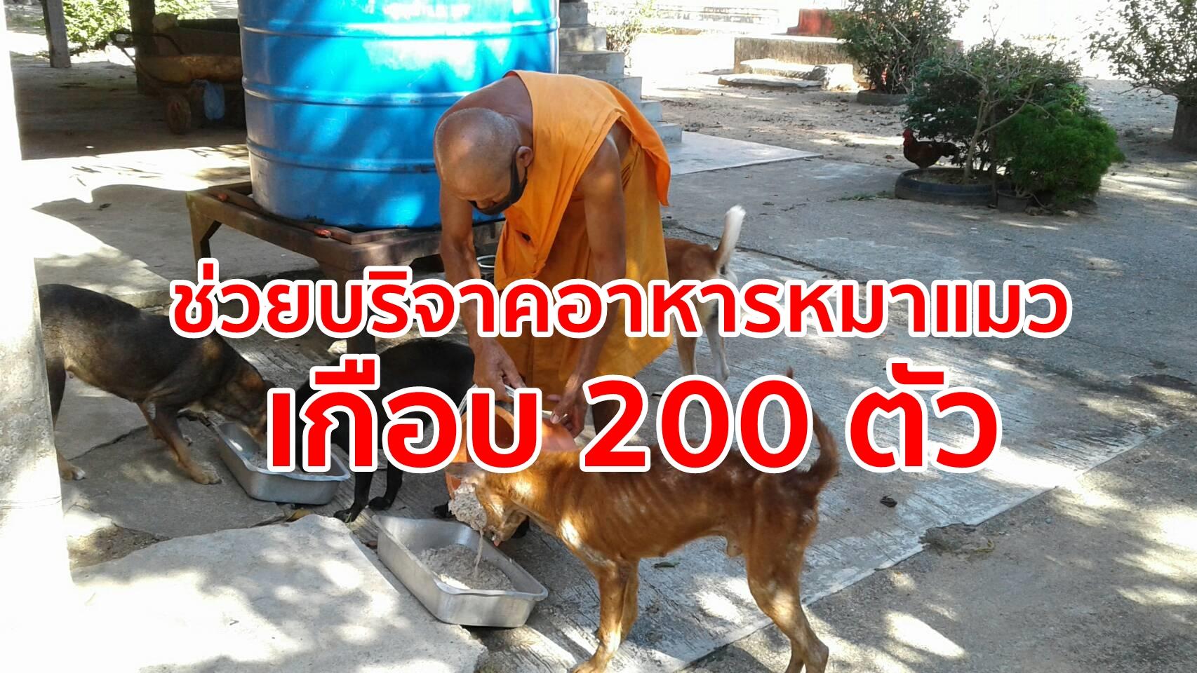 วอนผู้ใจบุญช่วยแบ่งเบาพระ หลังชาวบ้านพาหมาแมวทิ้งวัดเกือบ 200 ตัว