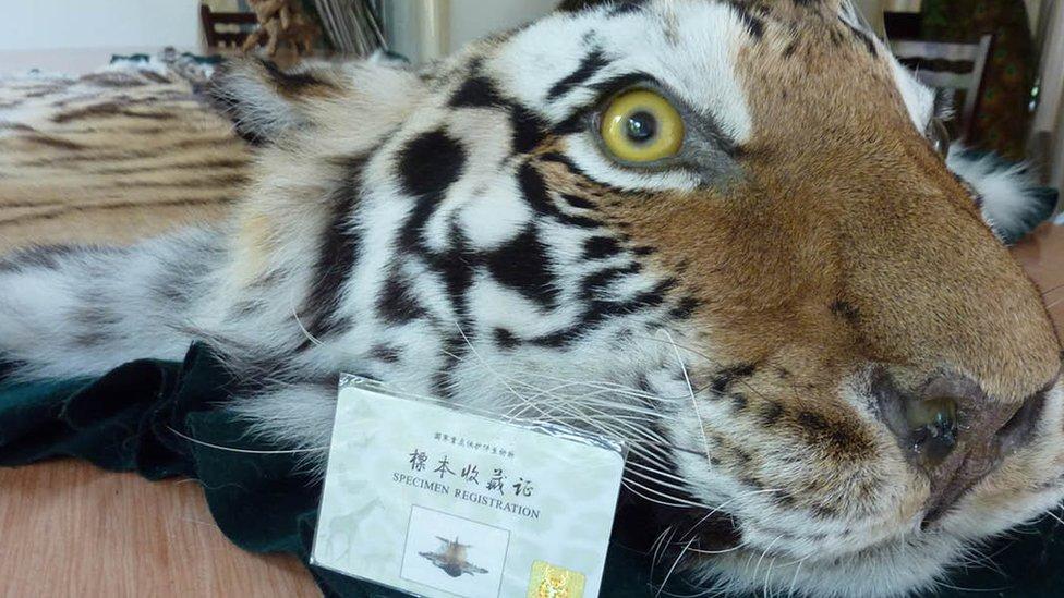 โควิด-19 : เหตุใดการห้ามค้าเนื้อสัตว์ป่าของจีนอาจไม่ช่วงคุ้มครองชีวิตสัตว์ป่าได้จริง