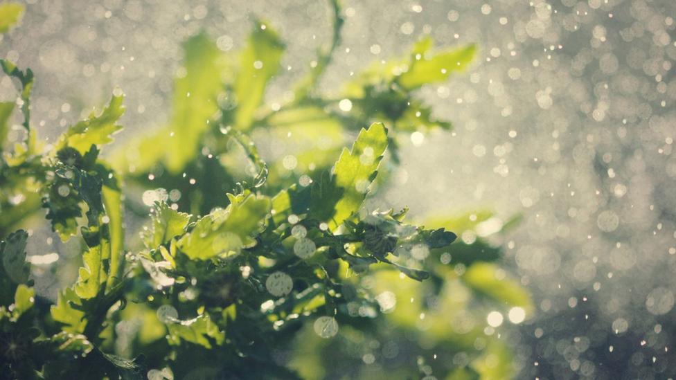 แบคทีเรียใช้ความหอมของไอดินกลิ่นฝน หลอกล่อสัตว์ในดินให้มาช่วยแพร่พันธุ์