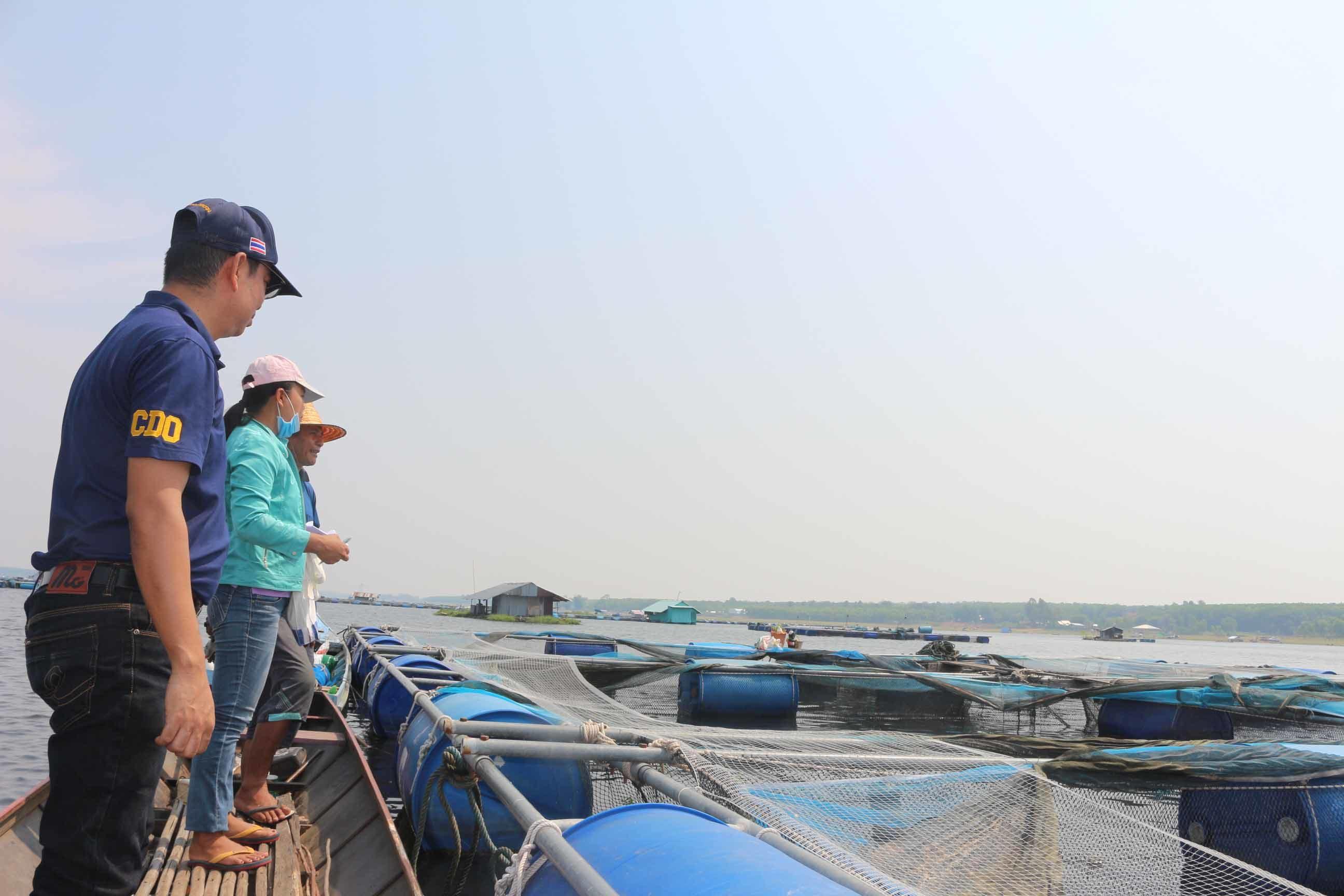 อากาศแปรปรวน อุณหภูมิร้อนจัด ทำปลากระชังน๊อกกว่า 20 ตัน