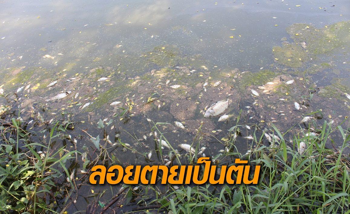 ปลาในอ่างเก็บน้ำบ้านโคกพัฒนา ลอยตายเป็นตัน เหตุออกซิเจนในน้ำน้อย คาดอากาศแปรปรวน