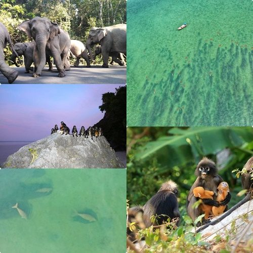 โควิด ปิดป่า สัตว์แฮปปี้ พะยูน 30 ตัว ลอยคอ  นกเงือก-ช้าง-ค่างแว่น พร้อมใจโชว์ตัว สบายใจอย่างไม่เคยเป็นมาก่อน