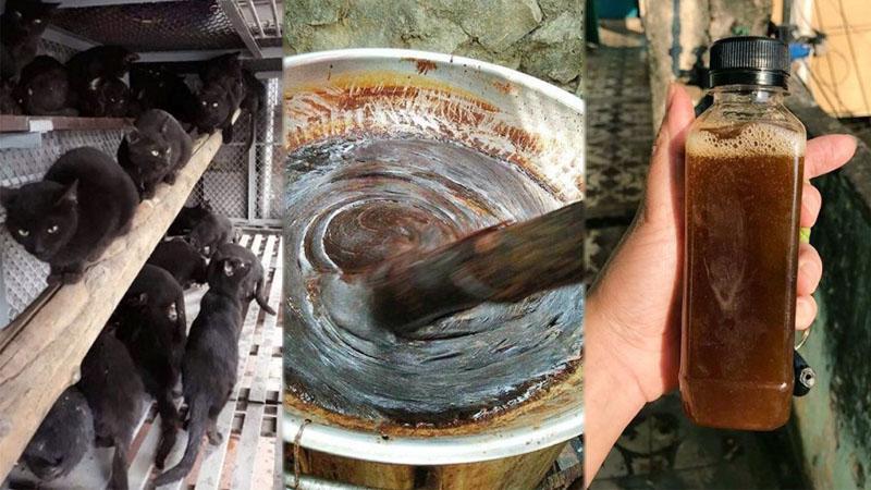 """เปิดโปงธุรกิจน้ำสกัด """"แมวดำ"""" ต้มสดในฮานอย ชี้ไร้หลักฐานรักษาโควิด-หวั่นเชื้ออื่นระบาด"""