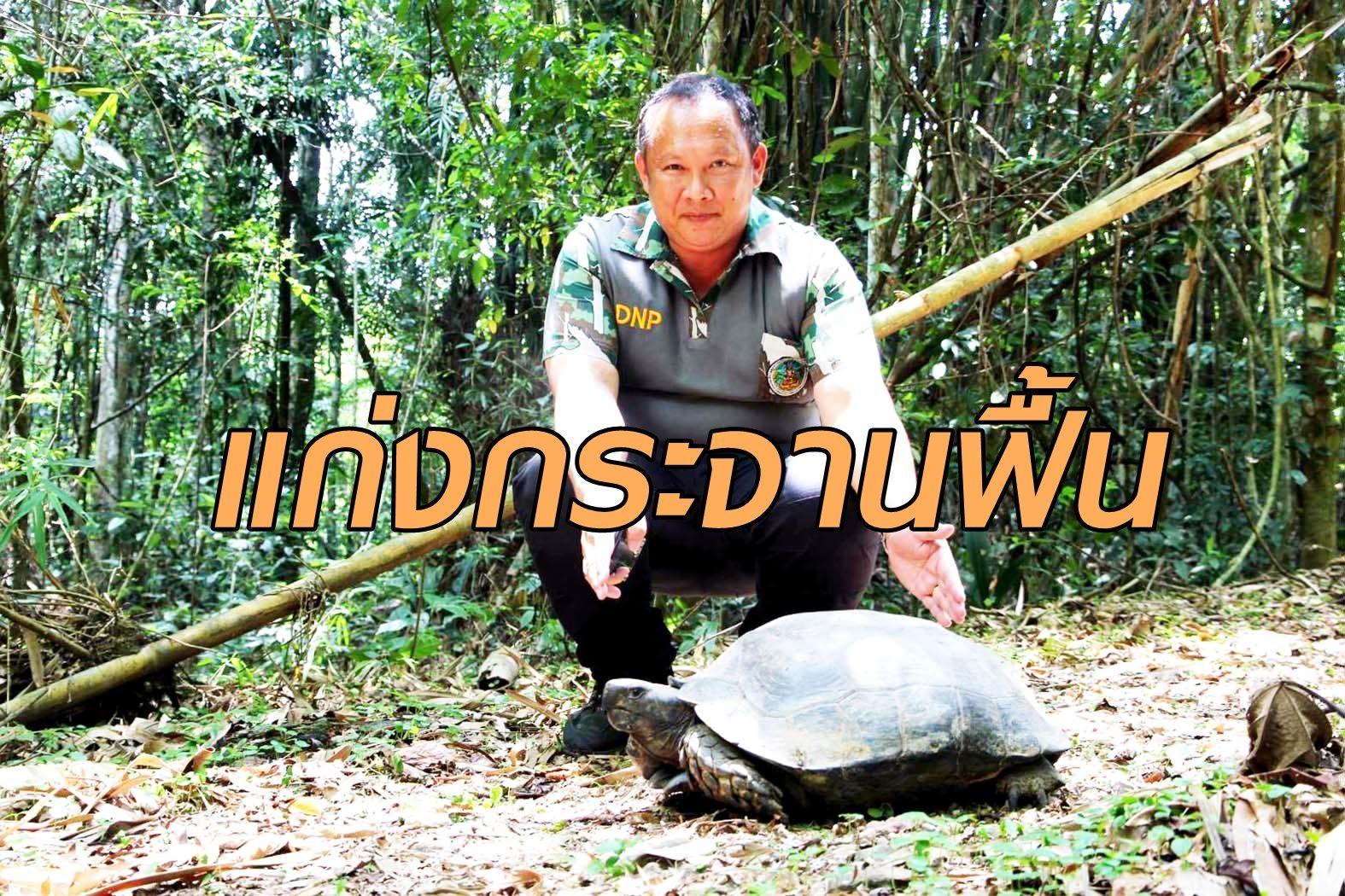 โควิด ทำ'อุทยานแก่งกระจาน'เริ่มฟื้นสู่ธรรมชาติ ตะลึง!พบ'เต่าหก'ตัวใหญ่