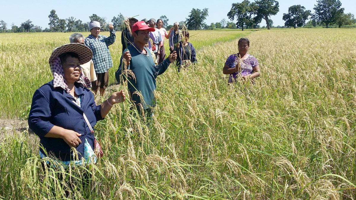 รัฐบาลสั่งห้ามพูด คลังรูดซิปปาก ปมแจกเงินเกษตรกร ชี้ยังไม่สรุป