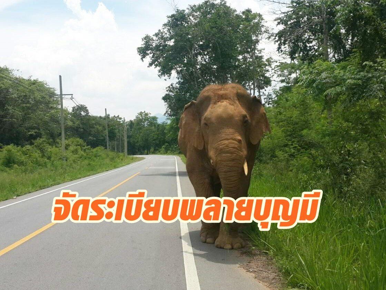 กรมอทุยานฯพร้อมใช้ปลอกคอติดสัญญาณดาวเทียมจัดระเบียบ พลายบุญมี ช้างป่าละอูก่อนย้ายเข้าป่าลึก
