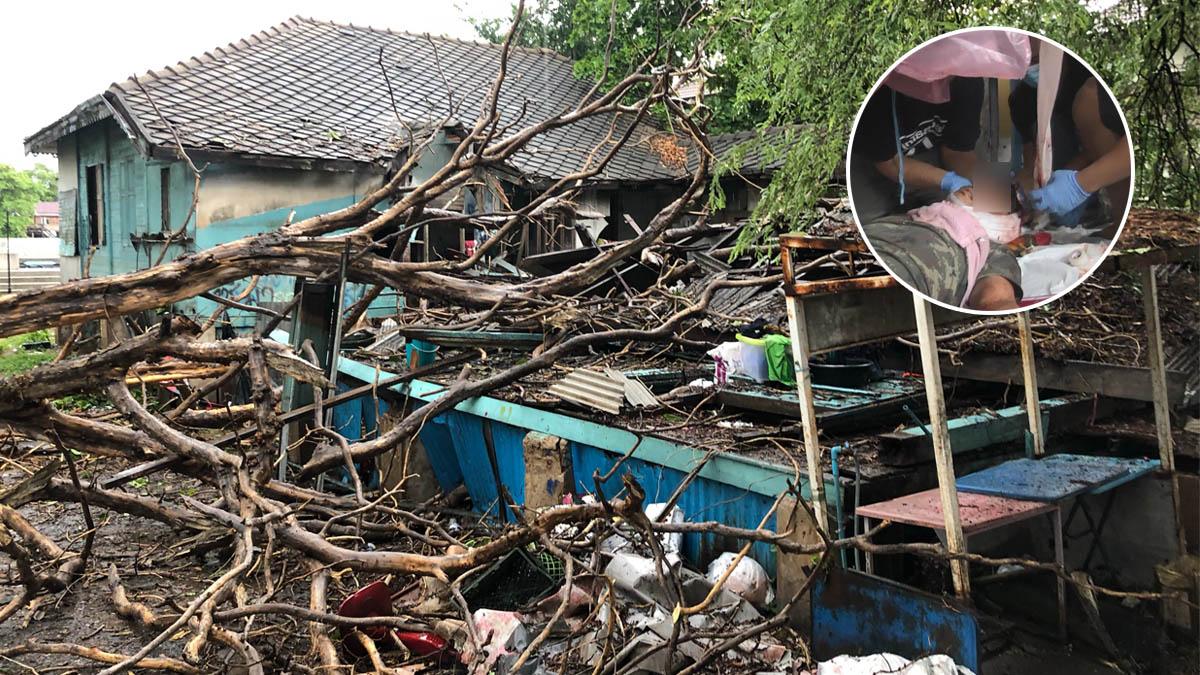 หนุ่มรับเหมาเคราะห์ร้าย พายุซัดต้นไม้ร้อยปี ล้มทับบ้านพังยับ-ฟาดหัวเจ็บหนัก!
