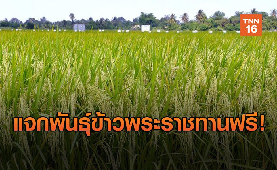 กรมการข้าว แจก 5 พันธุ์ข้าวพระราชทานเพื่อเกษตรกรฟรี!