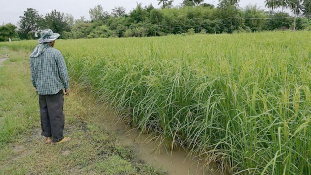 ผ่านเกณฑ์เยียวยาเกษตรกร 6.7 ล้านคน เผย 91,426 ขรก.ส่ออดได้เงิน